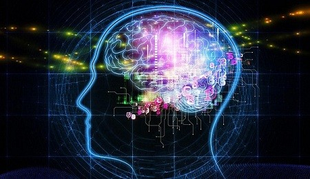 Мозг, общая информация