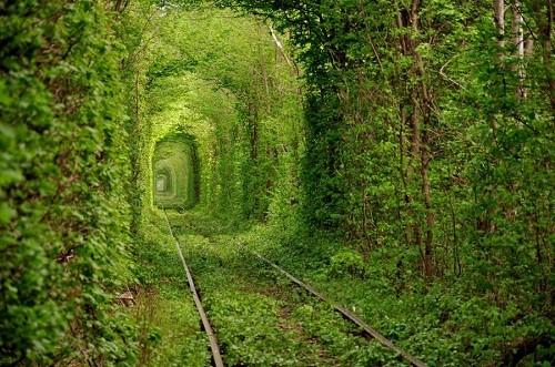Путь Гинкго