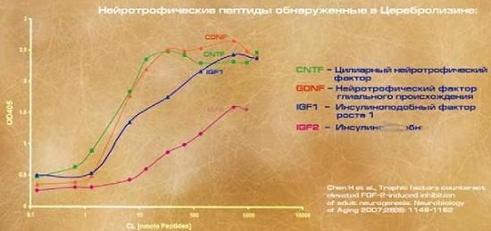 Рост нейротрофинов церебролизин