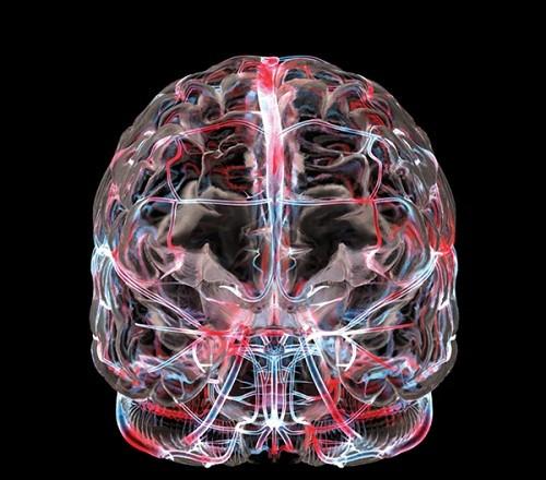 мозг кровеносная система