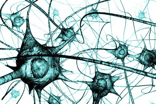 нейрон связи в мозге