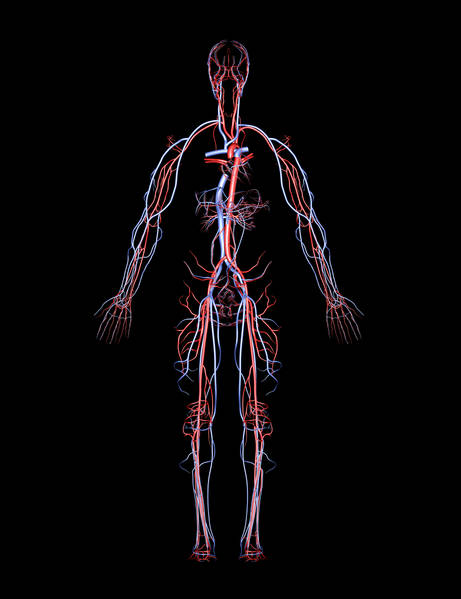 кровеносные сосуды болезни